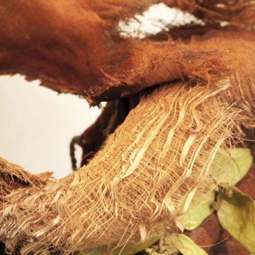 Palm fibre close up