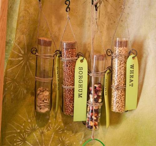 Seeds in glass vials with paper identification tags