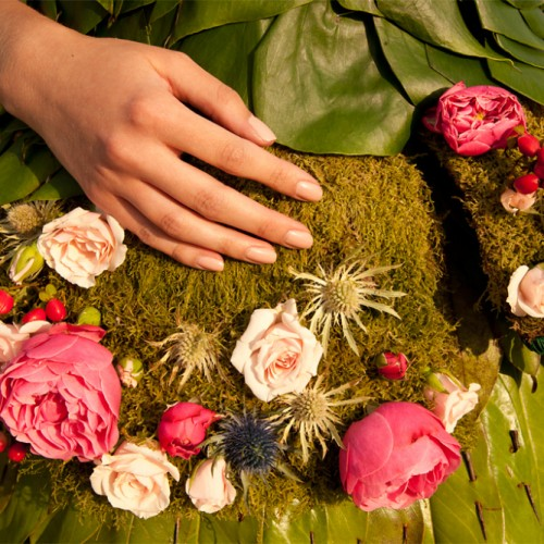 Wild Rose detail