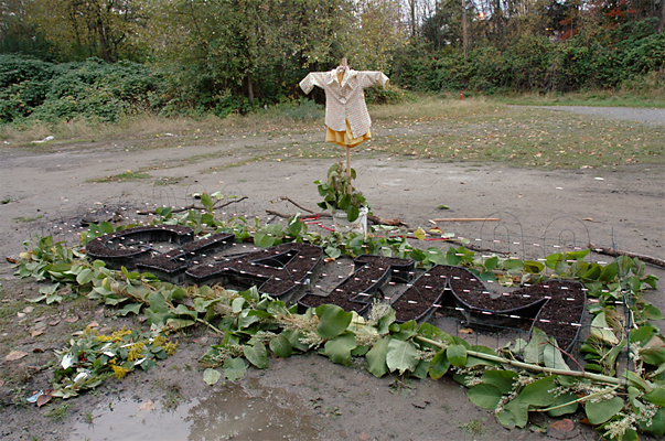 Scaring Crows - A scarecrow and flashy ribbon was erected around the planting to discourage the birds from eating the seeds.