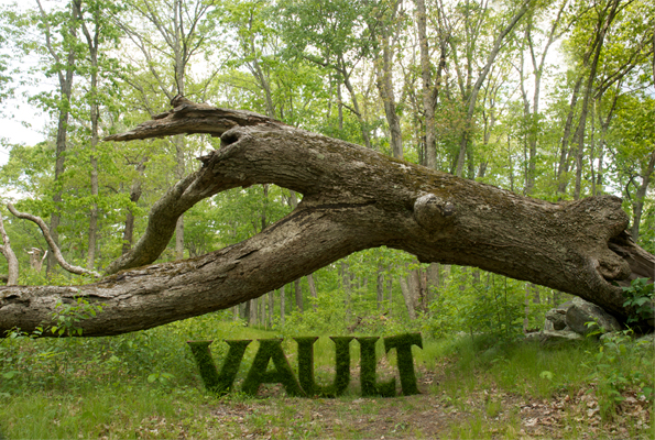 Vault - The word Vault under the vault like canopy of the forest and under the arch of a fallen tree.