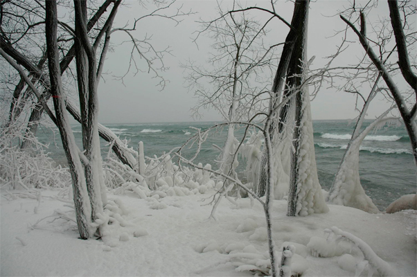 Winter Sentinels - The wind, the snow and the ice leave their trace on the trees.