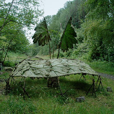 Weather Vane - Second Shelter was built as a open air sky viewing space with leaf flags acting as windsocks. The top is open and frames the sky. Gunnera leaves and Willow branches.