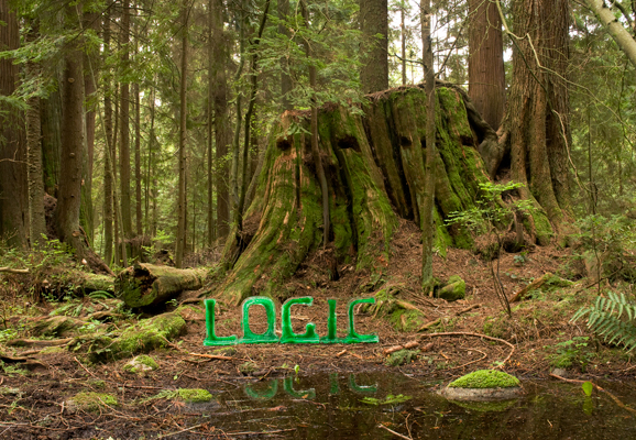 Logic - It once seemed logical to cut down these mighty trees.