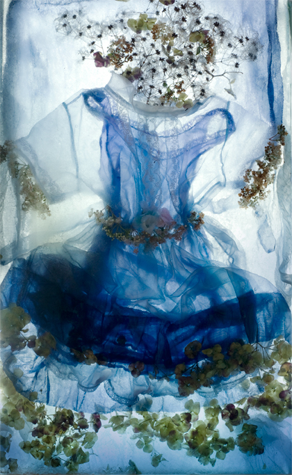 Clémence - Photograph of Clematis seedpods, Hydrangea flowers, artificial flowers, fabric, ice.