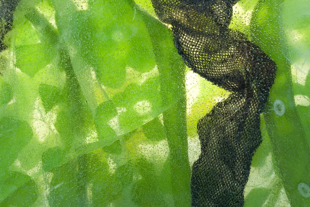 Cutwork & Underwires, Detail