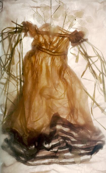 Luna - Photograph of Annual Honesty (Lunaria Annua), Pampas Grass (Cortaderia selloana), fabric, ice.