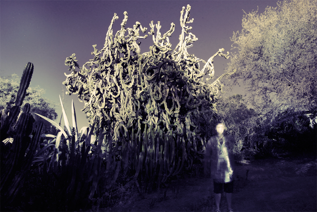 Light painting of myself in front of an enormous cactus by moonlight.