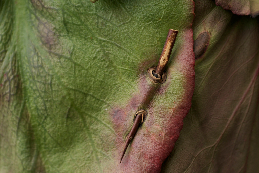 The piercing thorn will survive long after the plant material decomposes.