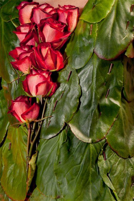 Roses, thorns and Berginia leaves