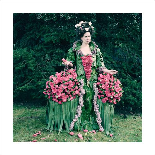 Camellia Countessa
