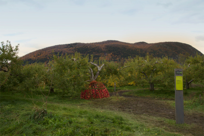 Pommes Maison in the apple orchard with Mont St-Hilaire in the background.