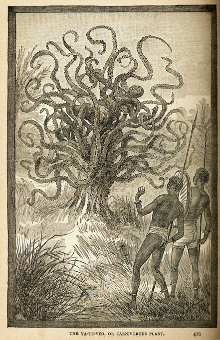 "The Ya Te Veo tree from ""Sea and land"" an illustrated history of wonderful curious things by J W Buel 1887."