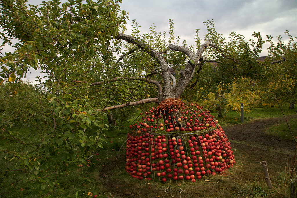 Pommes Maison. Apple House. A sweet smelling place to sit, eat apples and contemplate life.