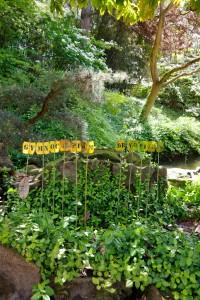 Gymnocarpium Dryopteris, Oak Fern